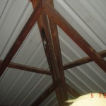 BPI Building & Pest Inspection at Clayfield – Roof Batten Wood Decay Found